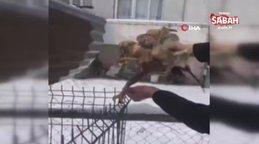 Bolu'da hayvansever vatandaş kurtardığı şahinin pençeleriyle böyle yaralandı