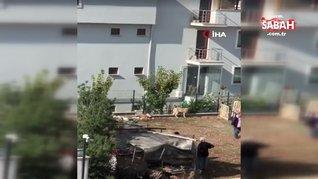 Denizli'de sokak köpeğine sopalı işkence!