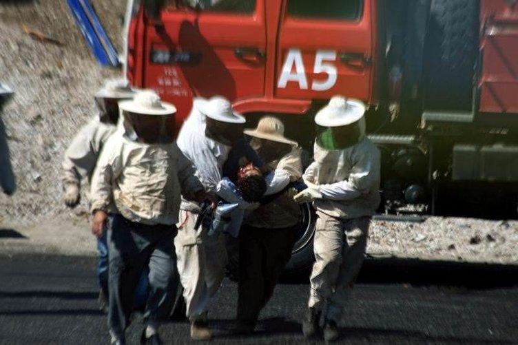 Muğla'da arı saldırısı