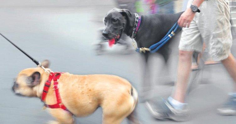 Köpeğin yaptığından sahibi sorumlu