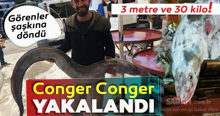 Antalya Körfezi'nde 30 kilogramlık deniz yılan balığı yakalandı