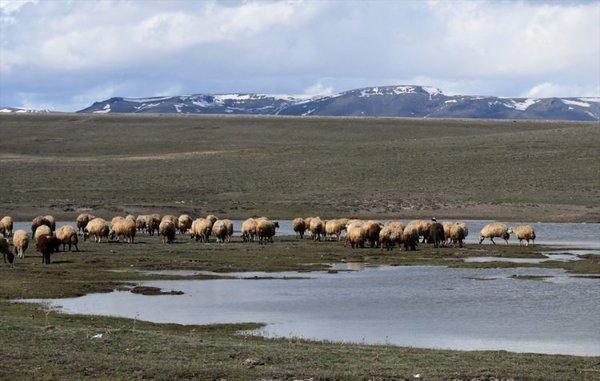 Kars'ta meralar canlanıyor