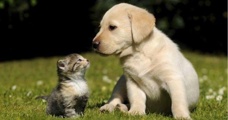 Ruyada Yavru Kedi Gormek Anlami Nedir Neye Isarettir Ruyada