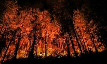 Bucak yangını ile ilgili yeni gelişme: Gözaltına alınanlar...