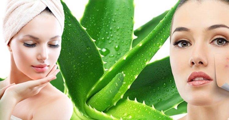 Aloe vera sivilce maskesi tarifi - Aloe vera bitkisi cilt lekelerine iyi gelir mi, sivilceye sürülür mü?