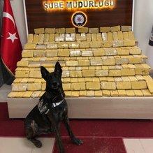 Van'da uyuşturucu tacirlerine narkotik köpeği Alfa'dan darbe!