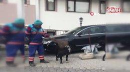 İstanbul Üsküdar'da temizlik işçisinin sokak köpeklerine süpürgeyle masaj yaptığı anlar kamerada