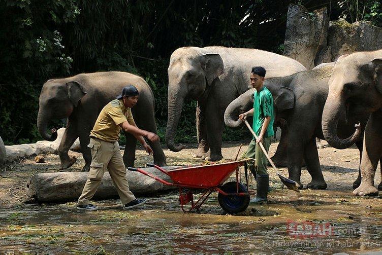 Fil dışkısından üretiyorlar!