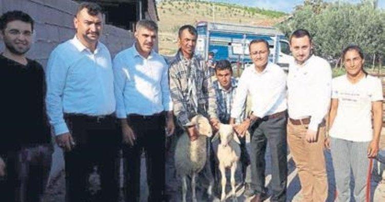 Genç çiftçilere kuzu desteği