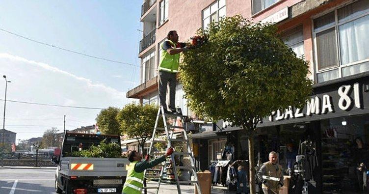 Düzce'de ağaçların kışlık bakımları yapılıyor