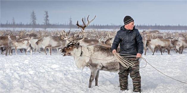 Rusya'nın ren geyiği çobanları