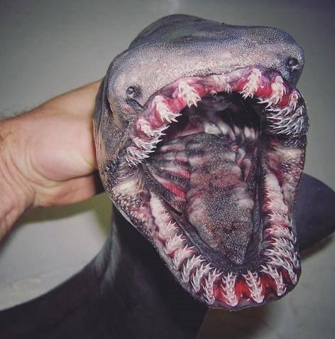 Rus balıkçı ortaya çıkardı! Kimse gözlerine inanamıyor