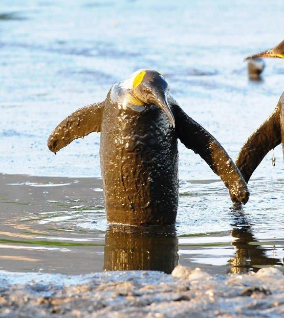 Haftanın en ilginç hayvan fotoğrafları