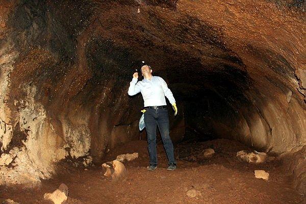 Lav tüpü mağaraları yabani hayvanlara yuva oldu