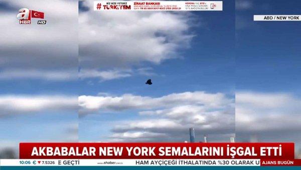 Akbabalar New York'ta gökyüzünü işgal etti