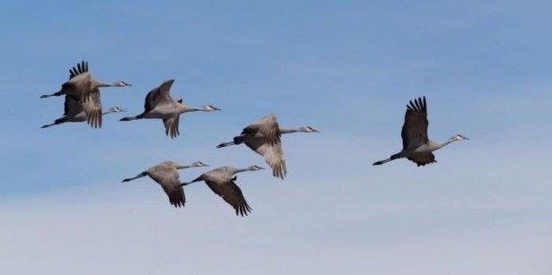 Hayvanların inanılmaz göç fotoğrafları
