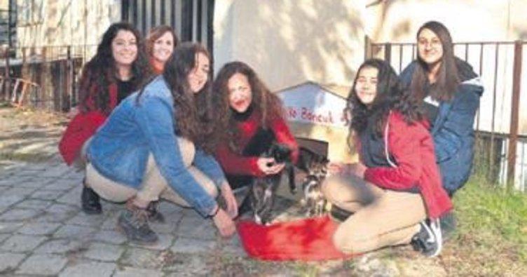 Boncuk ve yavrularına öğrenciler kucak açtı