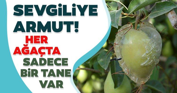 Antalya'da üretilen kalp şeklinde armutlar yoğun...