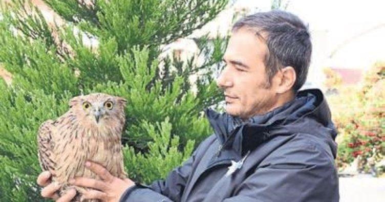 Burdur'da ilk kez görülen baykuş