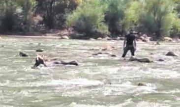 Zap Suyu'na kapılan ayıyı raftingciler kurtardı