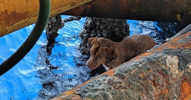 Tayland'da kıyıdan 220 kilometre açıkta yüzen köpek bulundu