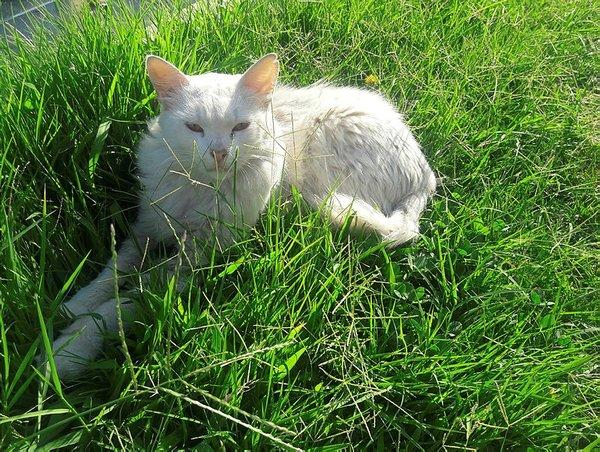 Durakta istenmeyen kedi için yazı astı, paylaşım rekoru kırdı