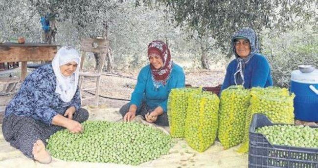 Büyükşehir'den hasat destekleri