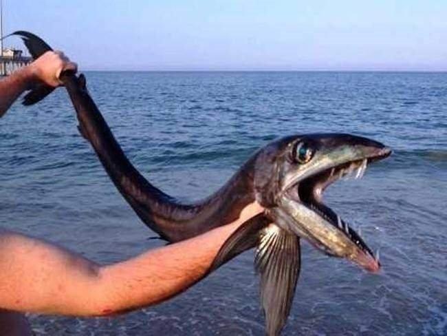 Gördükten sonra denize girmeye korkacağınız 10 balık