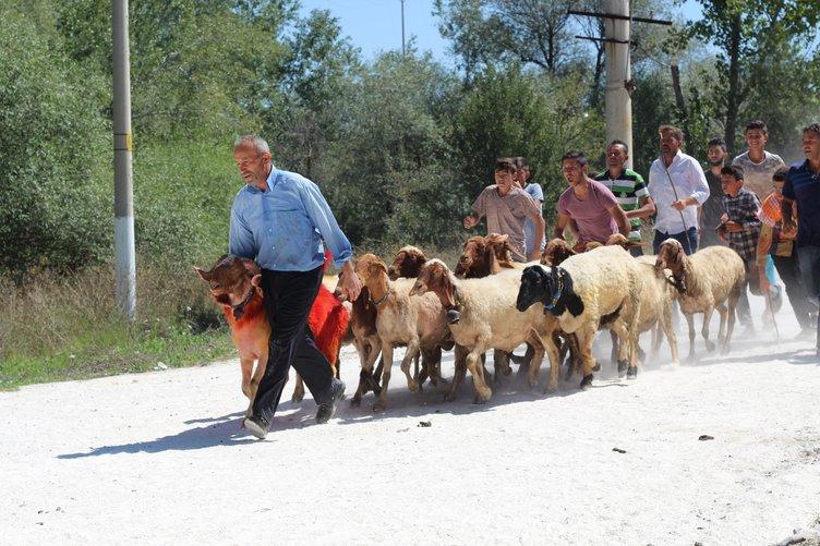 8 asırdır süren gelenek: Sudan Koyun Geçirme Yarışması!