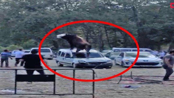 Samsun'da kurbanlık boğanın park halindeki aracın üstünden geçtiği anlar olay oldu | Video