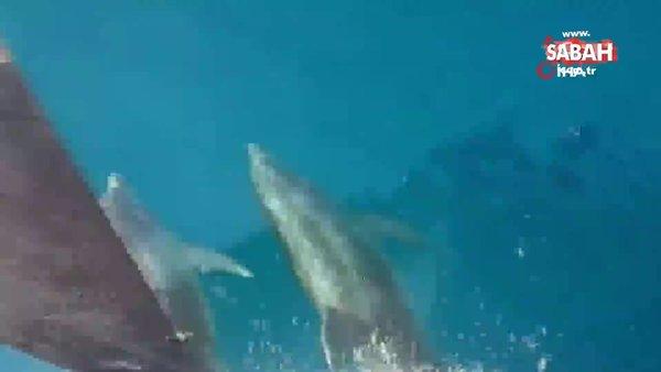 Antalya'da yunuslar tekneye böyle eşlik etti | Video