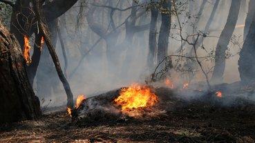 Son dakika: Adana'da orman yangını çıktı