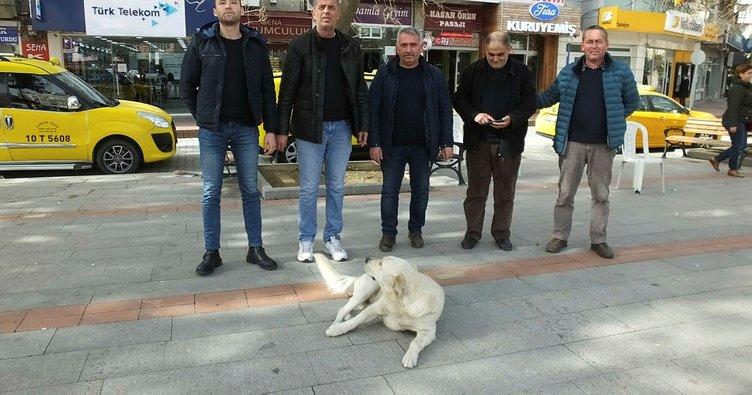 Burhaniye'de sokak köpeği, taksicilerin maskotu oldu