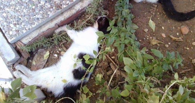 Antalya'da kedi ölümleri devam ediyor