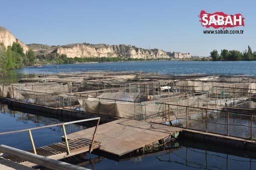 Fırat'ın balıkları yurt dışına ihraç ediliyor