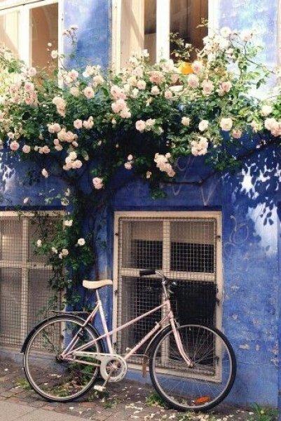 En güzel balkon ve bahçe çiçekleri