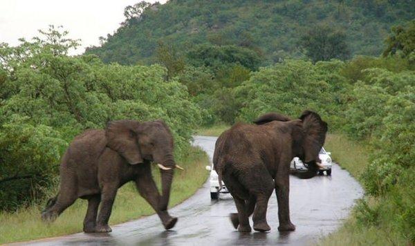Dikkat fil çıkabilir!