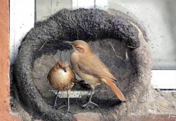 Bir kuş yuvası hikayesi