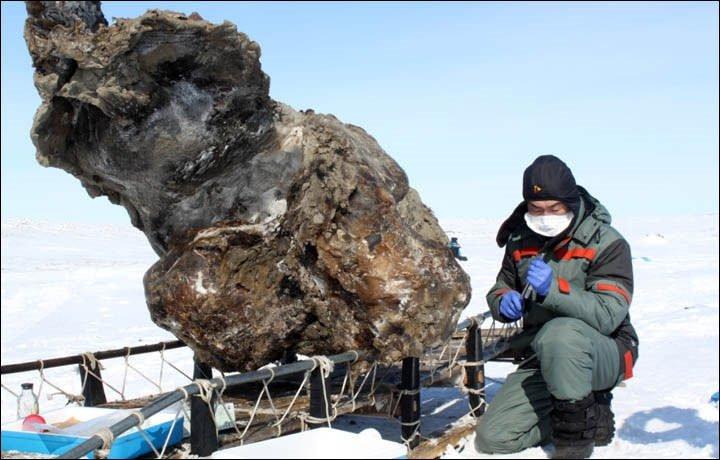 40 bin yaşındaki mamuttan taze kan