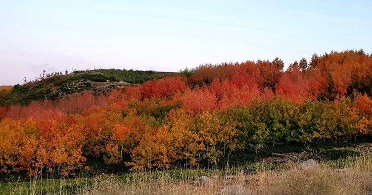 Yeryüzü cenneti Nemrut Krater Gölü sonbahar renklerine büründü