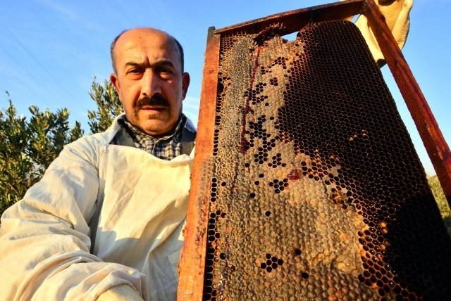Arılardan kırmızı bal