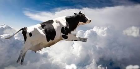 Gökten inek yağarsa
