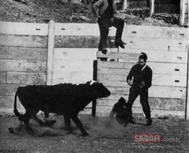 Köydeki insanlar aniden korkunç varlıklar görmeye başladı! İşin gerçeği kan dondurdu!