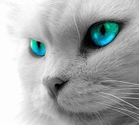 Hayvanların gözüyle dünya