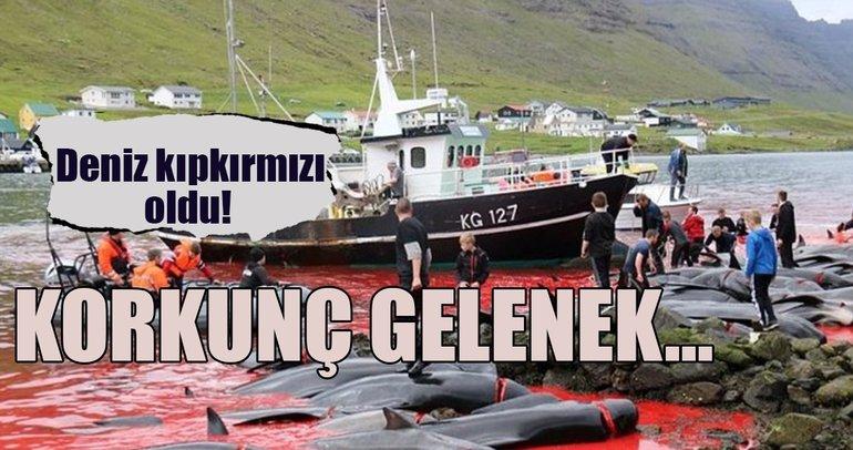 Danimarka'nın Faroe Adaları'nda balina katliamı