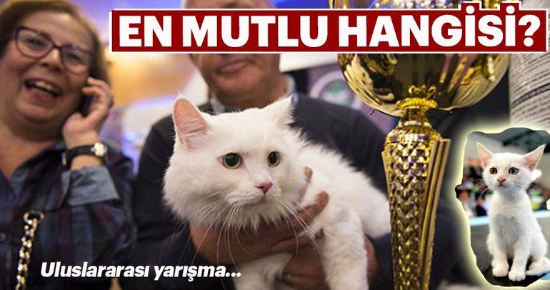 Uluslararası mutlu kediler yarışması...