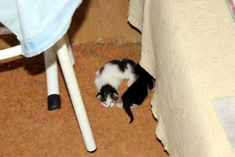 Çekyatın içinden onlarca kedi fırladı