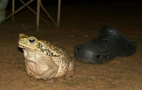 Birbirinden ilginç kurbağalar