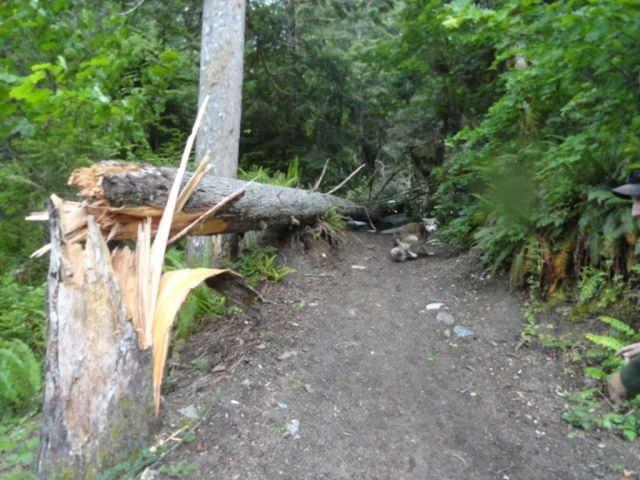 Ormanlık alanda kötü sürpriz