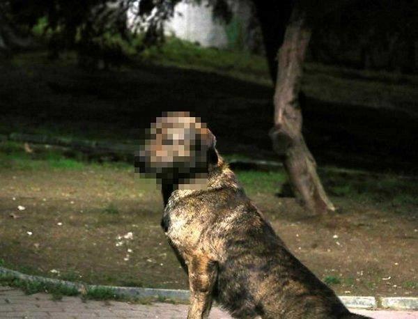 Köpeğe cinsel istismar iddiasıyla gözaltına alındı